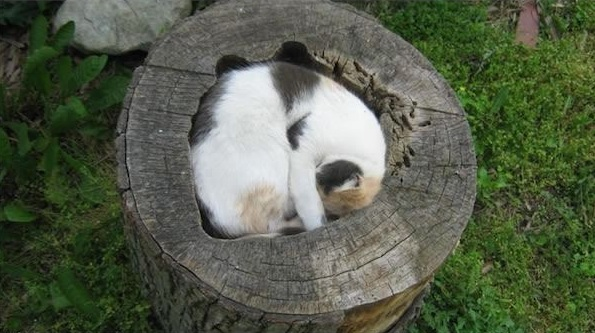 they look so comfy 16 pictures 8