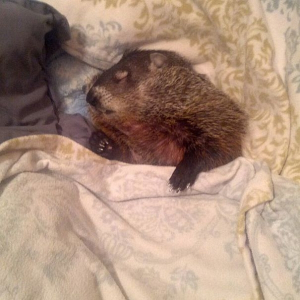 this story of a blind snuggly woodchuck will brighten your day 10 pictures 3