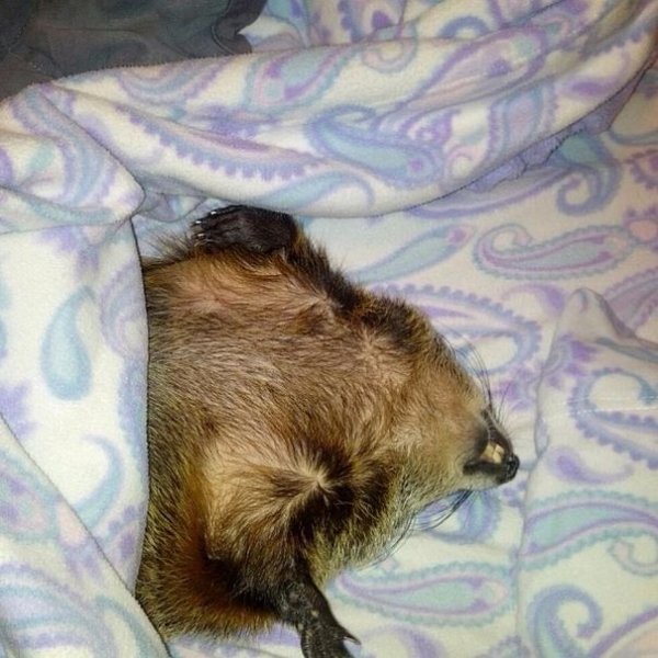 this story of a blind snuggly woodchuck will brighten your day 10 pictures 4