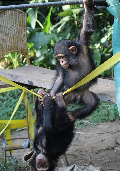 three little monkeys became friends because of their sad fates 16 pictures 13