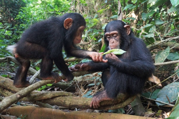 three little monkeys became friends because of their sad fates 16 pictures 14