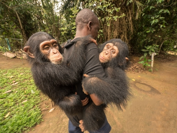 three little monkeys became friends because of their sad fates 16 pictures 16