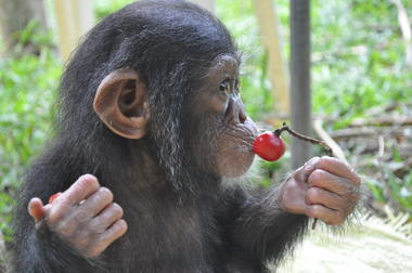 three little monkeys became friends because of their sad fates 16 pictures 7