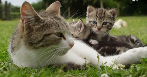 to a true mother the species are irrelevant 9 pics 1