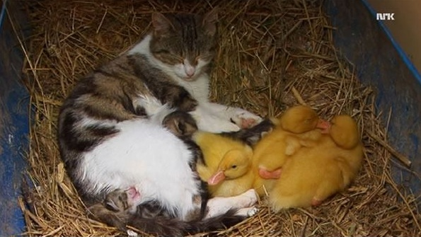 to a true mother the species are irrelevant 9 pics 3