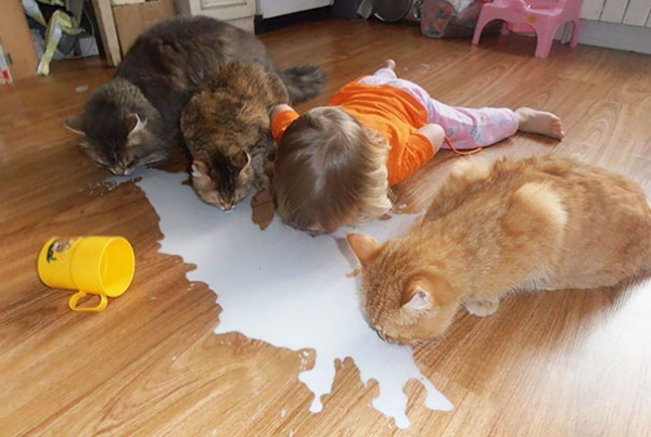 toddlers pets adorable combinations 10 pictures 1