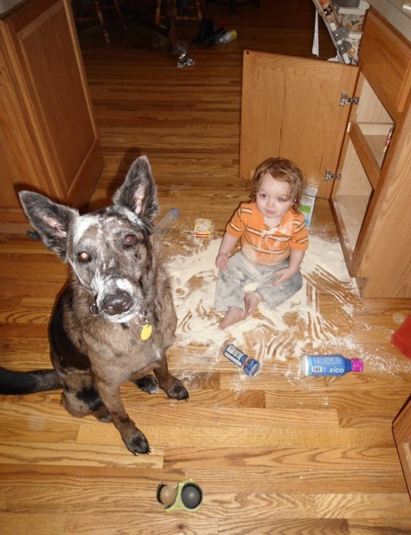 toddlers pets adorable combinations 10 pictures 4