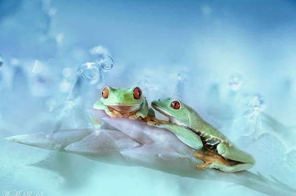 too beautiful to be real magical world of tropical frogs 17 pics 10