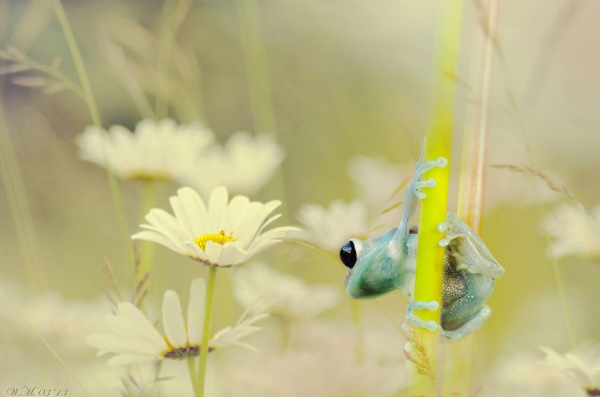 too beautiful to be real magical world of tropical frogs 17 pics 12
