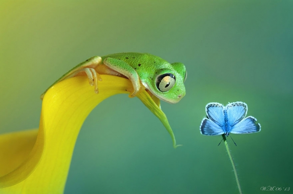 too beautiful to be real magical world of tropical frogs 17 pics 13