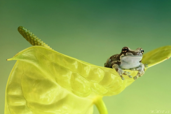too beautiful to be real magical world of tropical frogs 17 pics 14