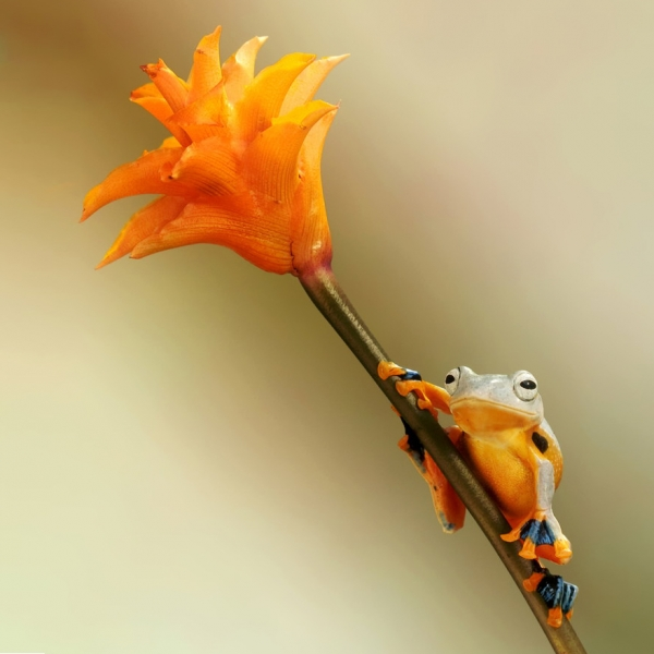 too beautiful to be real magical world of tropical frogs 17 pics 2