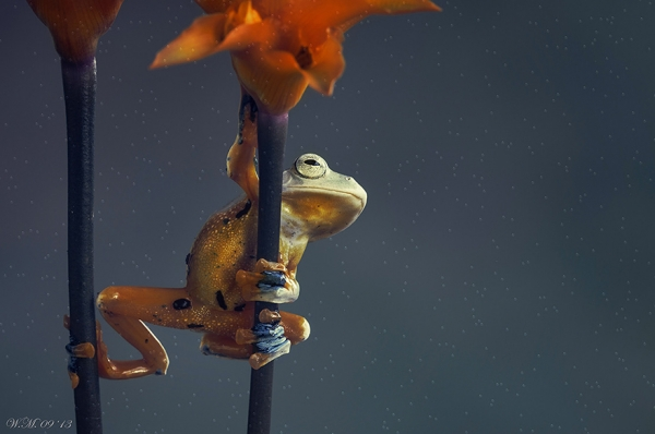 too beautiful to be real magical world of tropical frogs 17 pics 3