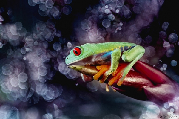 too beautiful to be real magical world of tropical frogs 17 pics 4
