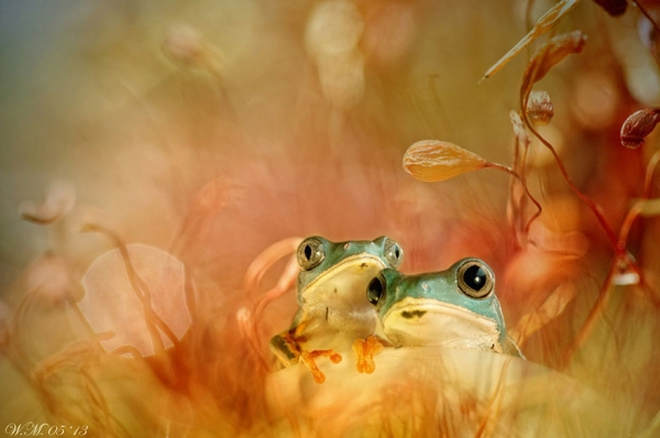 too beautiful to be real magical world of tropical frogs 17 pics 7