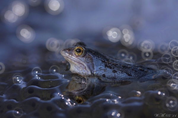 too beautiful to be real magical world of tropical frogs 17 pics 8