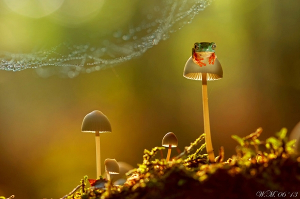 too beautiful to be real magical world of tropical frogs 17 pics 9