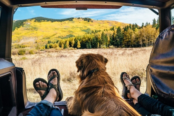 traveling with your dog make sure to remember these tips 10 pictures 1