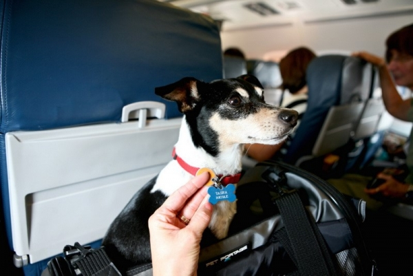 traveling with your dog make sure to remember these tips 10 pictures 6