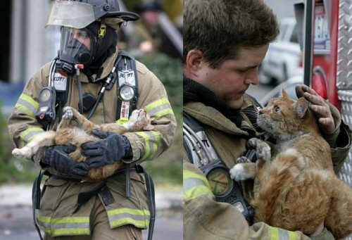 true display of compassion and self sacrifice 2