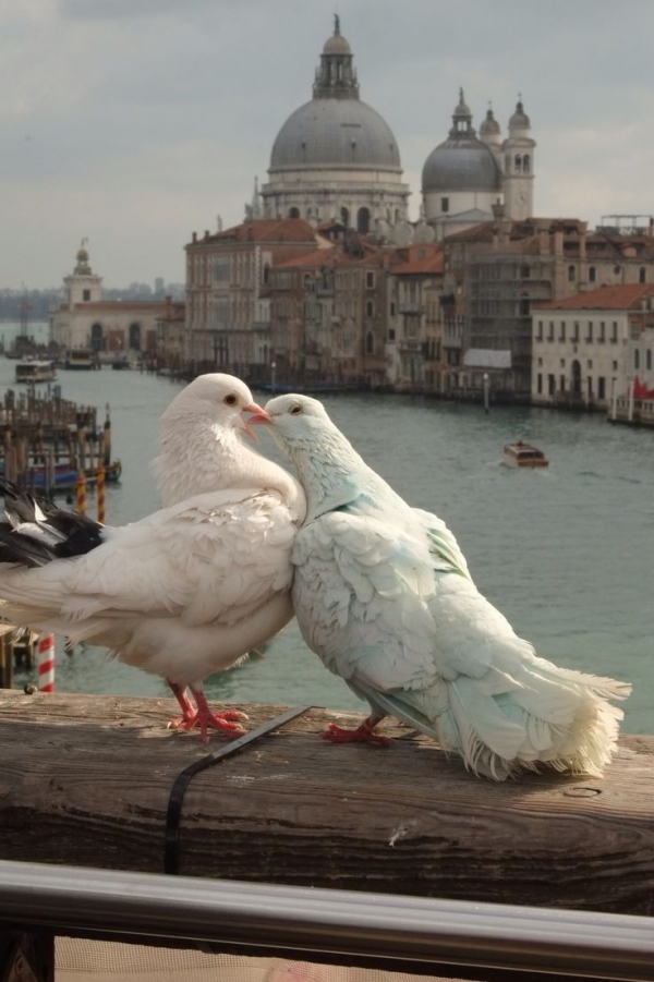 true meaning of lovebirds 12 pictures 11