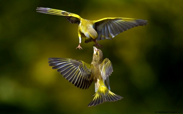 true meaning of lovebirds 12 pictures 4