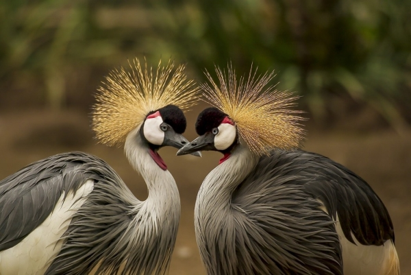 true meaning of lovebirds 12 pictures 6