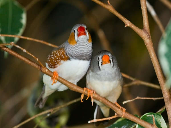 true meaning of lovebirds 12 pictures 7