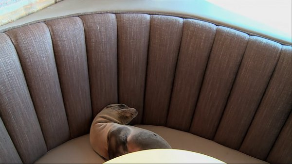 unexpected guest in classy san diego restaurant 9 pictures 10