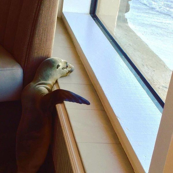 unexpected guest in classy san diego restaurant 9 pictures 11