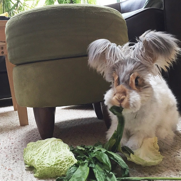 wally is the newest bunny sensation 10 pictures 10