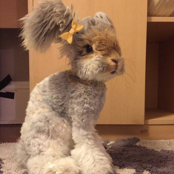 wally is the newest bunny sensation 10 pictures 2