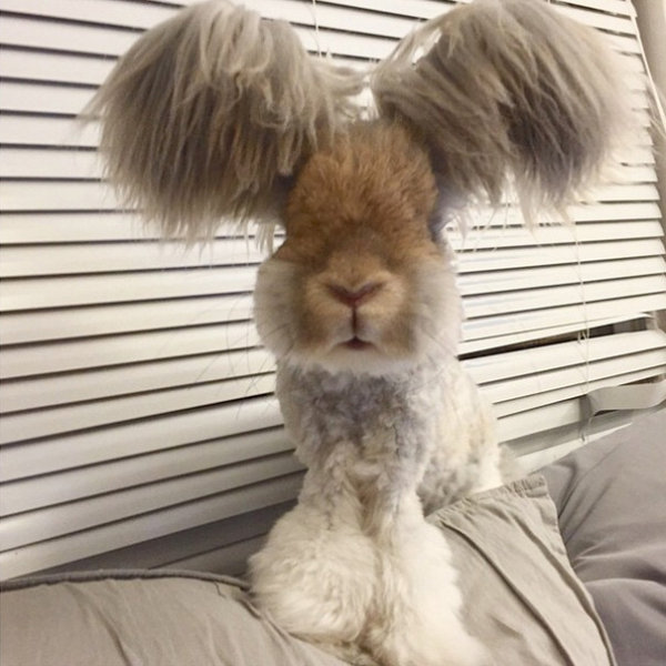 wally is the newest bunny sensation 10 pictures 3