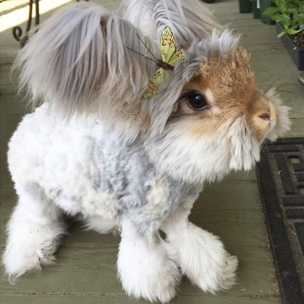 wally is the newest bunny sensation 10 pictures 4