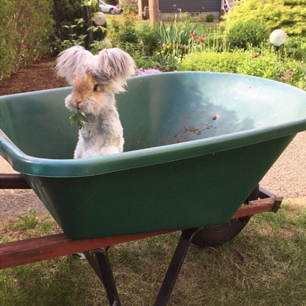 wally is the newest bunny sensation 10 pictures 6