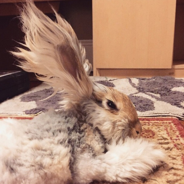 wally is the newest bunny sensation 10 pictures 9