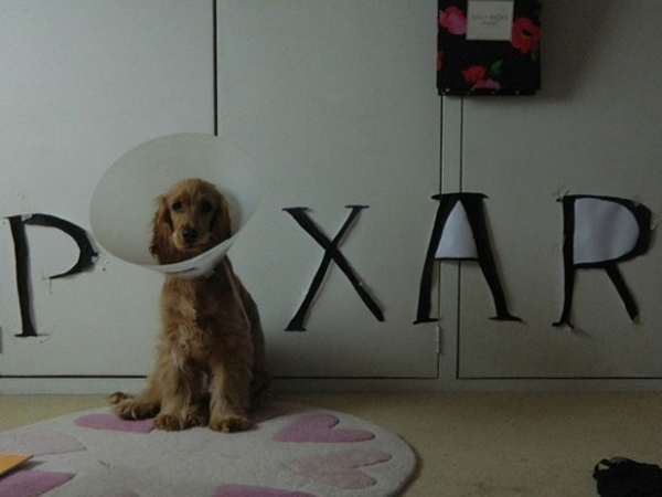 wearing a cone of shame can be fun if you are creative 12 pictures 1
