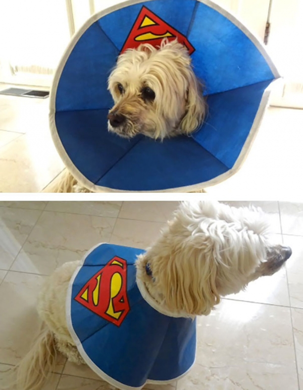 wearing a cone of shame can be fun if you are creative 12 pictures 10