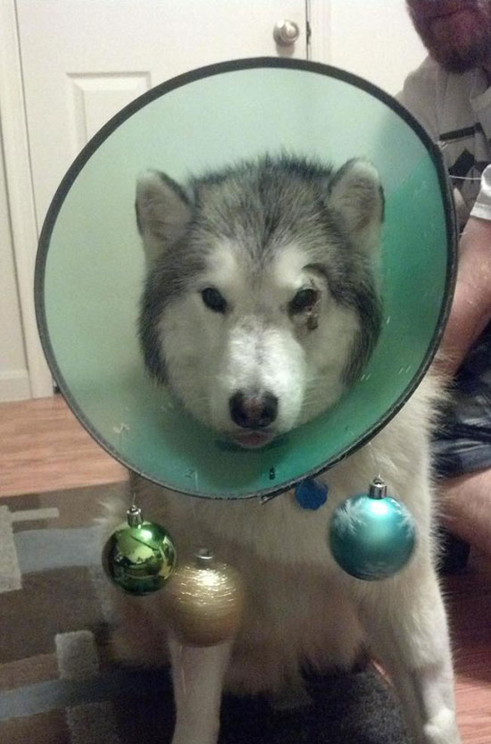 wearing a cone of shame can be fun if you are creative 12 pictures 11