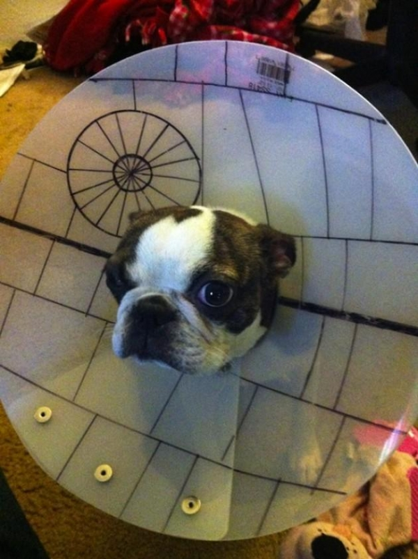 wearing a cone of shame can be fun if you are creative 12 pictures 2