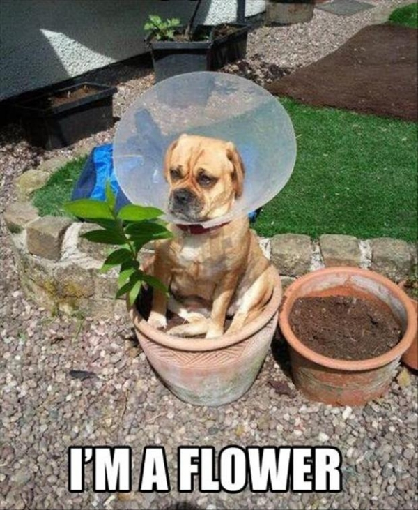 wearing a cone of shame can be fun if you are creative 12 pictures 3