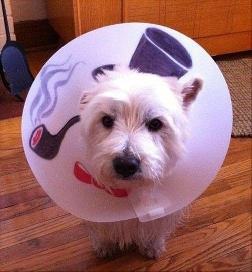wearing a cone of shame can be fun if you are creative 12 pictures 4