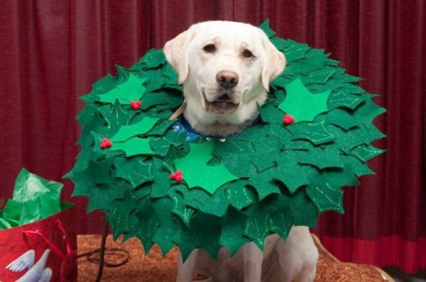wearing a cone of shame can be fun if you are creative 12 pictures 5