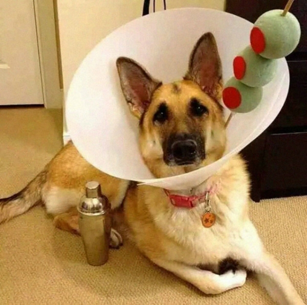 wearing a cone of shame can be fun if you are creative 12 pictures 6