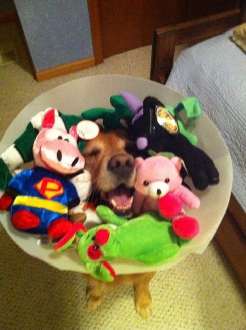 wearing a cone of shame can be fun if you are creative 12 pictures 7