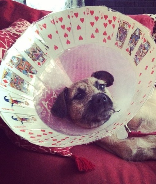 wearing a cone of shame can be fun if you are creative 12 pictures 8