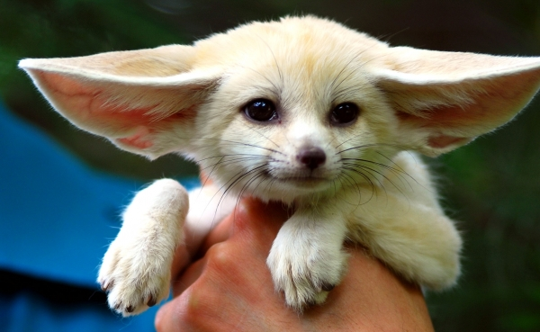 weirder than usual 10 pets you might want 8