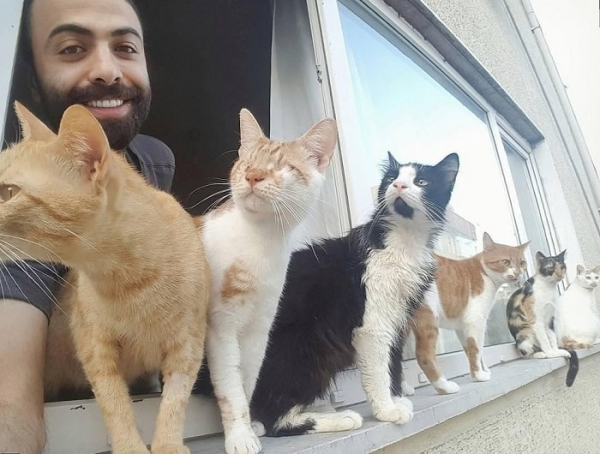 when a pianist saves cats from the streets magic happens 9 pictures 1 video 2