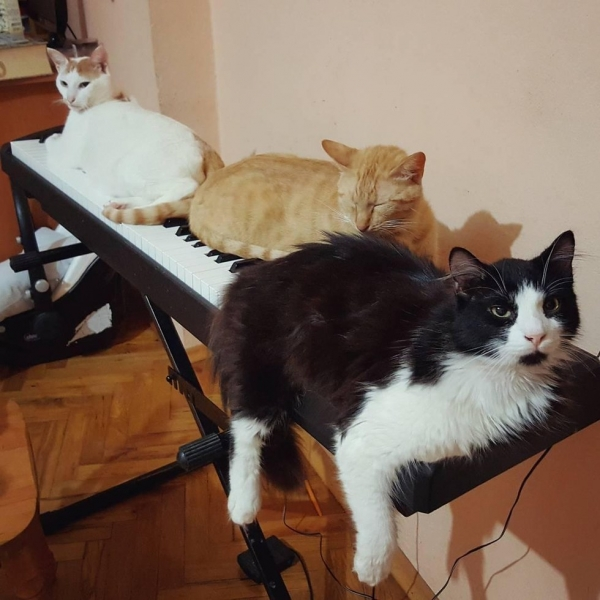 when a pianist saves cats from the streets magic happens 9 pictures 1 video 9