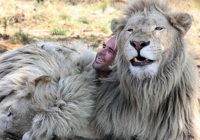 when work becomes pleasure 18 pics of lion whisperer from south africa 12